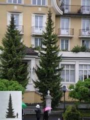 Picea omorika Ялина сербська
